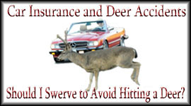 Insurance Statistics On Deer Car Accidents