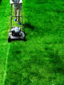 mowing_focus_grassshutterstock_124439149