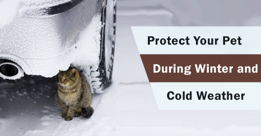 protect-weather-pet-2-AdobeStock_12091109